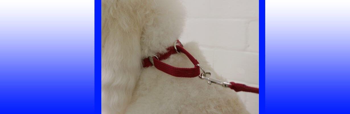 buy dog training collar