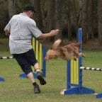 dog agility northern beaches
