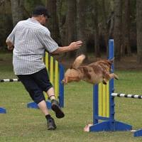 dog agility northern beaches