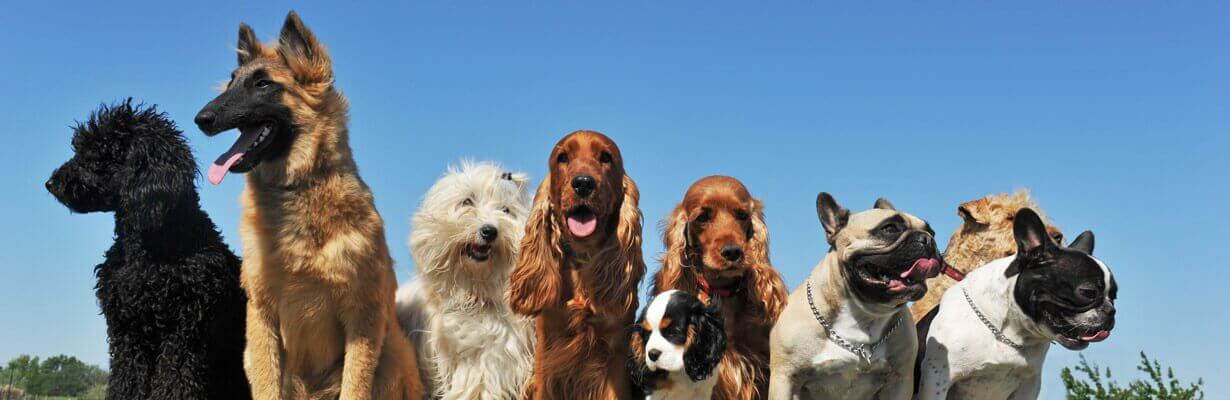 dog trainers northern beaches