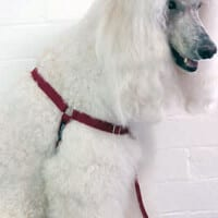 dog training harnesses
