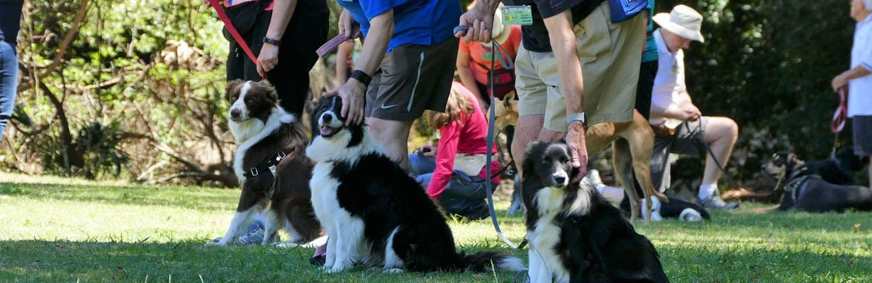 dog training northern beaches