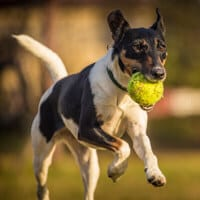 fly ball northern beaches
