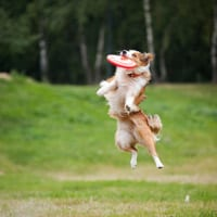 northern beaches dog frisbee classes