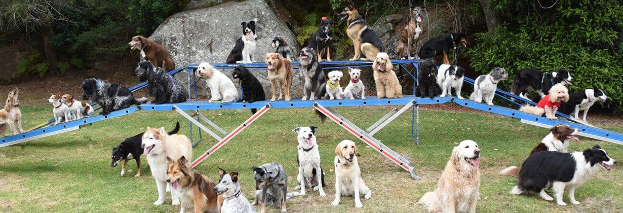 northern beaches dog training