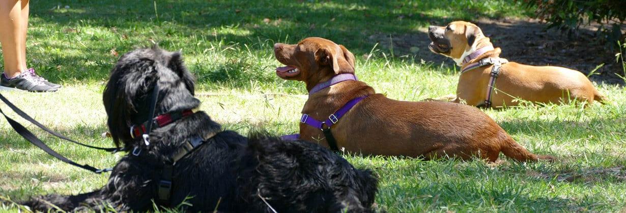 Dog Obedience Training Sydney North Shore