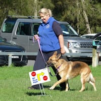 rally obedience northern beaches