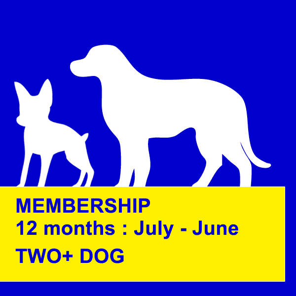 dog obedience training northern beaches 12 months