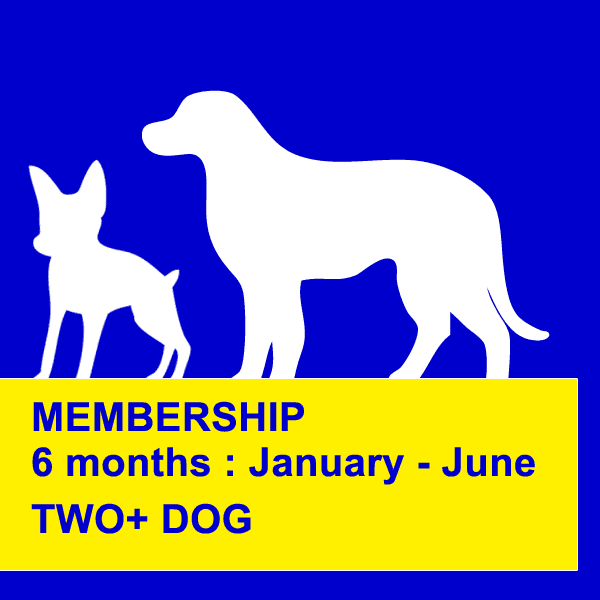dog obedience training northern beaches six months