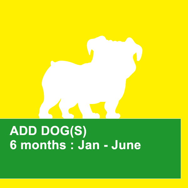 dog obedience training northern beaches 6 month