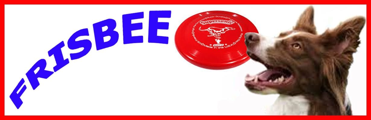 dog frisbee classes northern beaches