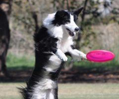 Frisbee 3