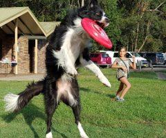 Frisbee 5