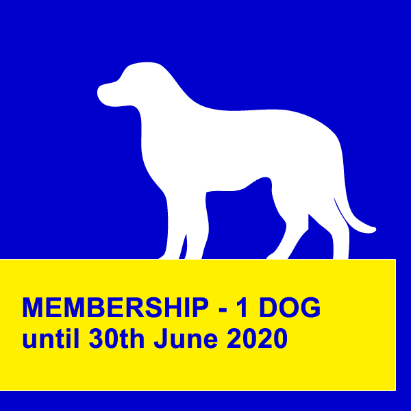 dog obedience training northern beaches 12 mths one standard